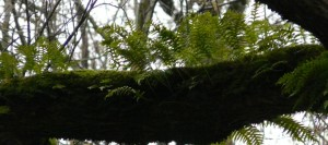 Ferns on branch